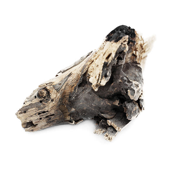A piece of foraged firewood, to be used for cooking or sold to buy food.