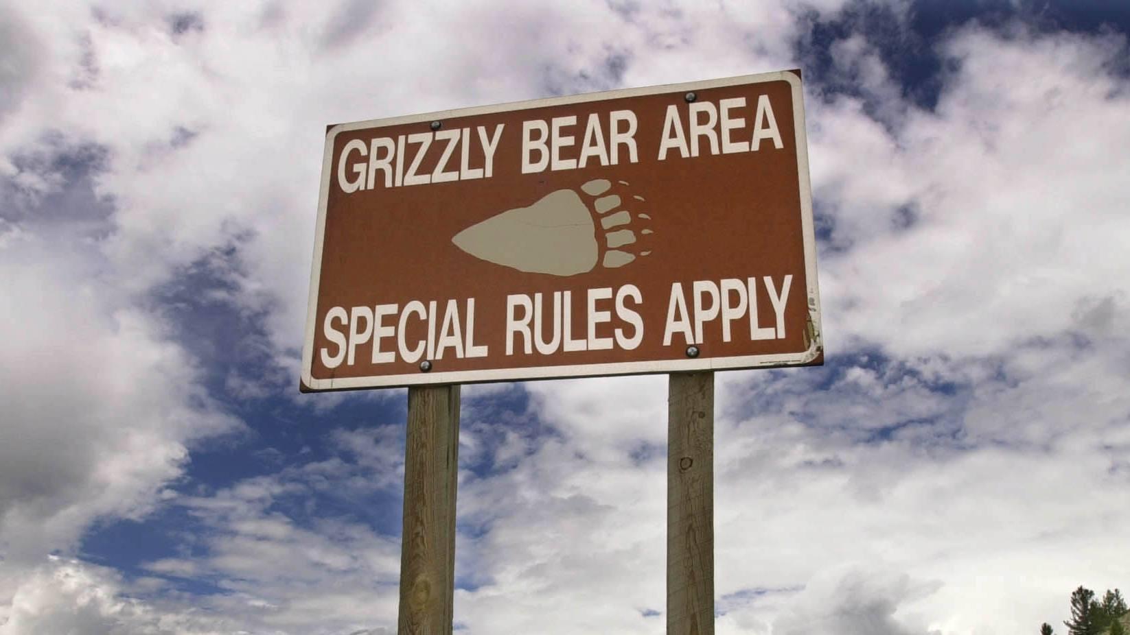 Ubiquiti Networks: lawyers, regulators, grizzlies and