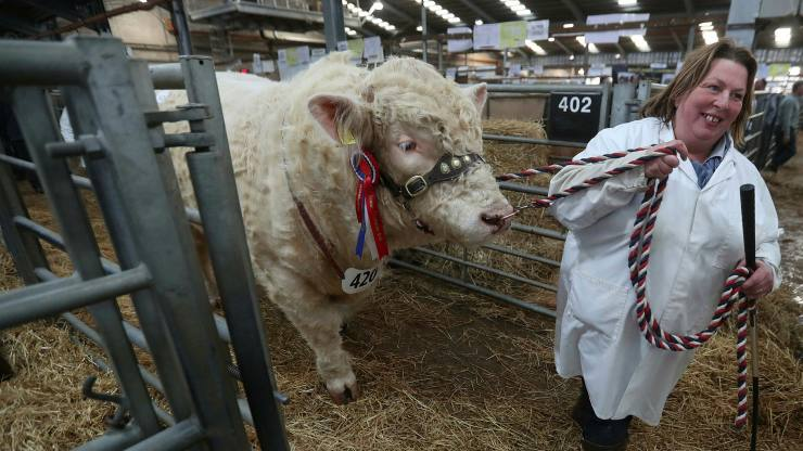Europe's dividend bull market