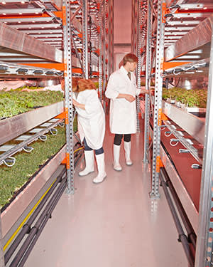 Co-founders Kate & Tom walk through the incubated salad nursery, checking and sampling the quality of the salads