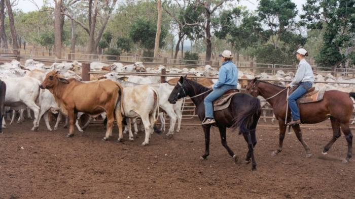 Kidman cattle station investment clubs mackenzie investments fund facts document