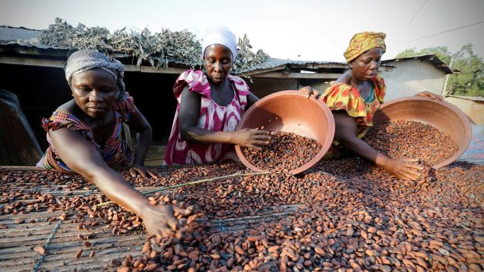 Chocolate makers and cocoa groups vow to end deforestation