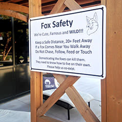 A 'Fox Safety' sign