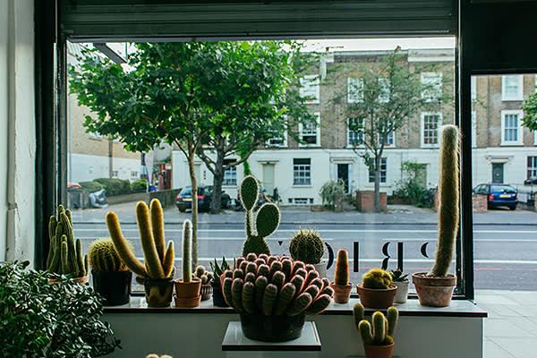 The cactus shop Prick, London