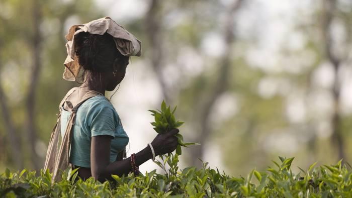 Woman working on field in the Rangpur region of Bangladesh