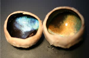 dissected reindeer eyes