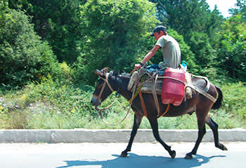 Donkeys are still a common form of transport