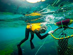 A haenyeo diving at Morado Island just off the coast of Jeju