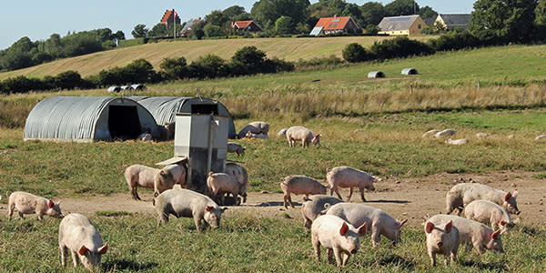 A British pork farmer wanting to sell into Europe would still be subject to EU animal health regulations