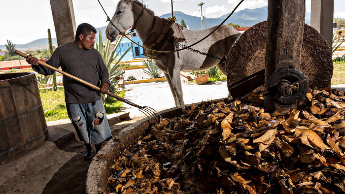 Monster mash: a worker rotates agave to be made into mezcal