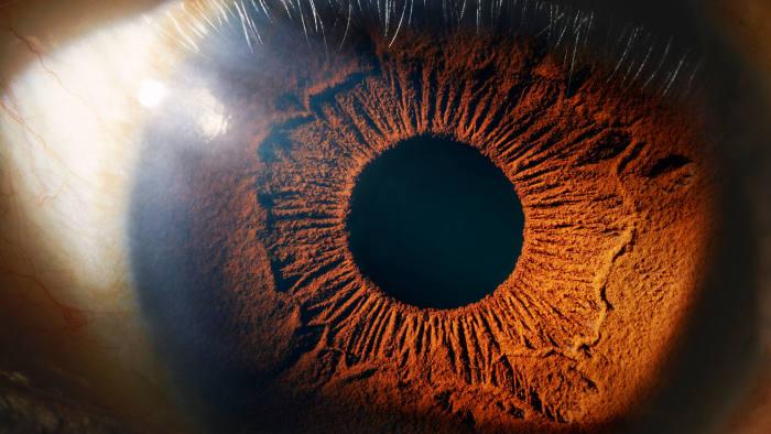 The eye: a most complex organ