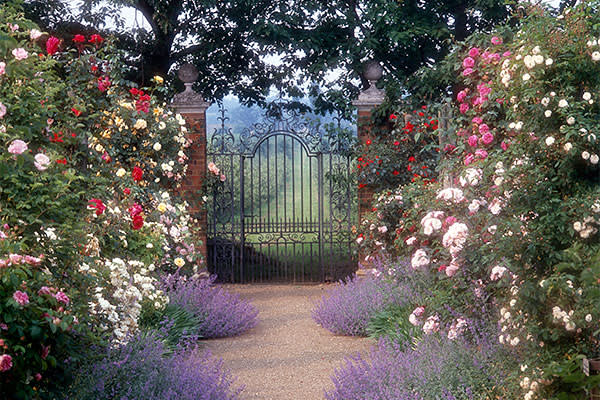 Rose Garden and Gate' - Postern House, Tonbridge, Kent. Roses and lavender growing on either side of path leading to ironwork gate, with green garden beyond     Date: 1996
