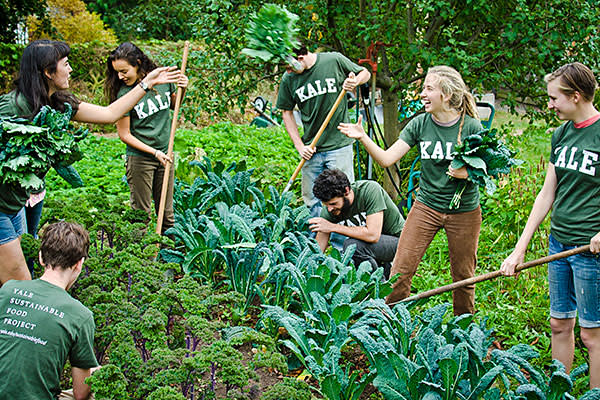 Volunteers on the Yale Sustainable Food Project