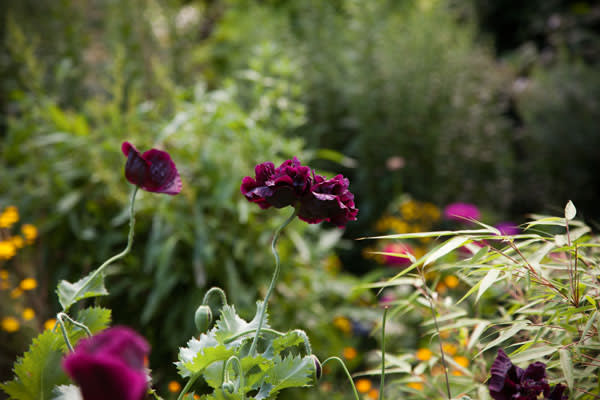 Flowers at the Chelsea Physic Garden