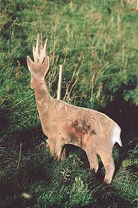 A deer target practice