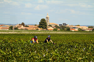 Cycling through vineyards at Margaux on Butterfield & Robinson's gastronomic tour of France