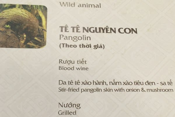 Pangolin on the menu at the Tiec Cuoi restaurant in Hanoi