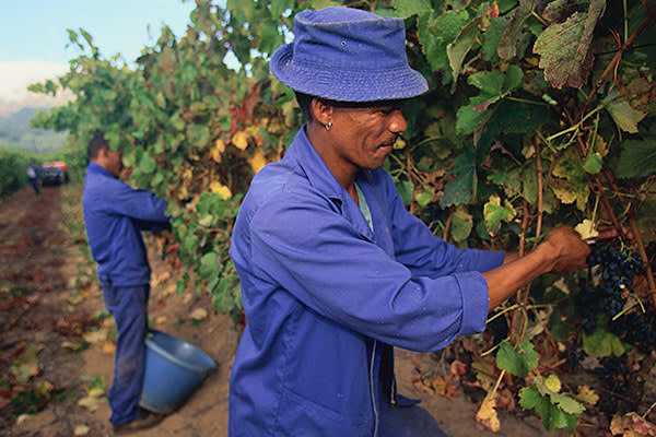 Groot Constantia Estate has been producing wine in South Africa for 330  years