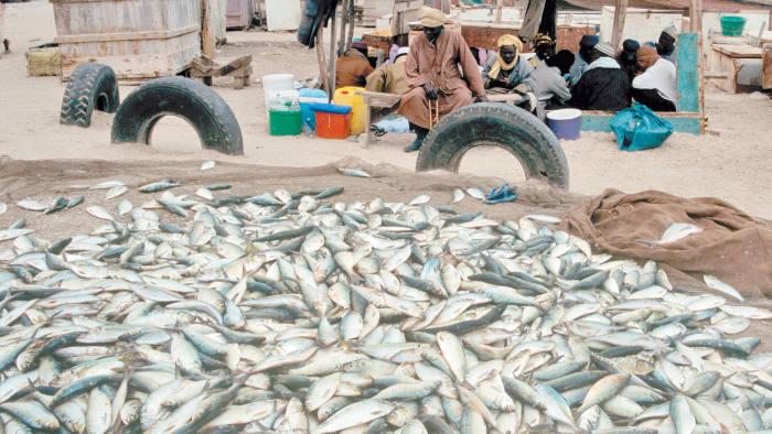 Fishing Port  Mauritania