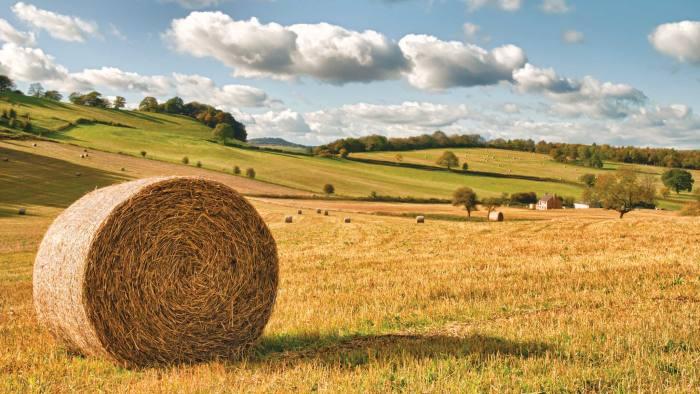 Farm Uk