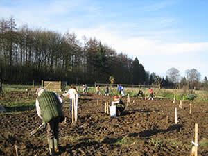 Planting the forest garden at Old Sleningford Farm, UK
