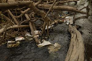 Waste left by loggers, Ratanakiri province, Cambodia