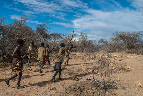 Hadza tribesmen tracking a wounded animal