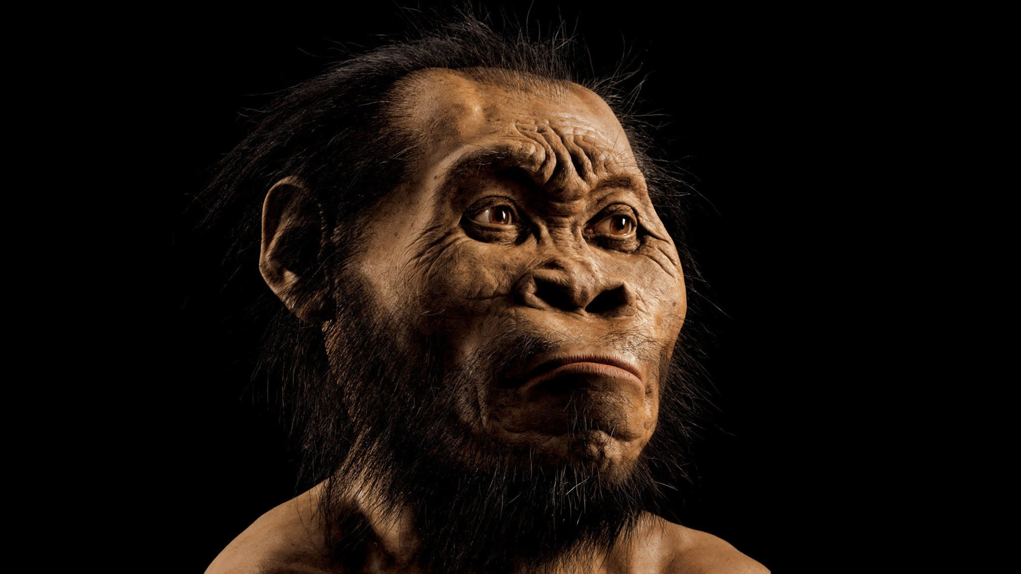Homo naledi, a new species of human, is discovered in South Africa | Financial Times