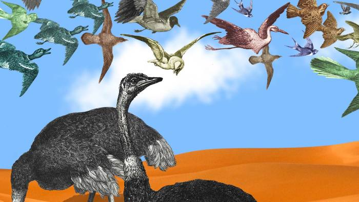 ostriches and birds