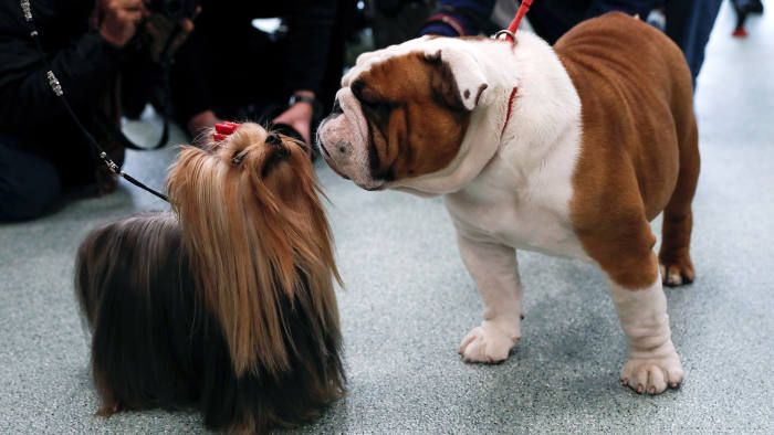 PetSmart's Chewy files for IPO | Financial Times