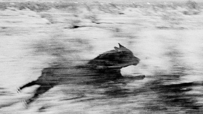 John Divola's 'Dog Chasing My Car in the Desert' series (199698)