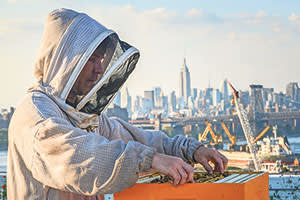 Chase Emmons takes out the honey bee frames for control at Brooklyn Grange. 08.25.2014, New York, NY.