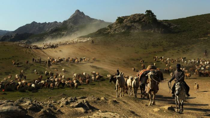 In this picture taken on June 2, 2012 shows Kazakh nomads herding their livestocks with their caravan across a plain in Altay, farwest China's Xinjiang region. The Altay or known in Chinese as the Aletai region is situated in the most northern part of Xinjiang, sharing a border on the east with Mongolia and on the west with Russia. CHINA OUT AFP PHOTO (Photo credit should read STR/AFP/Getty Images)