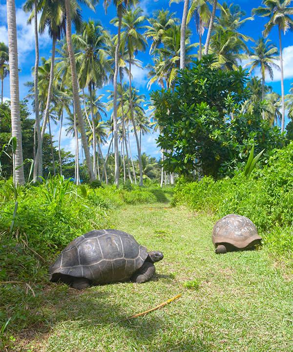 Fregate's tortoises