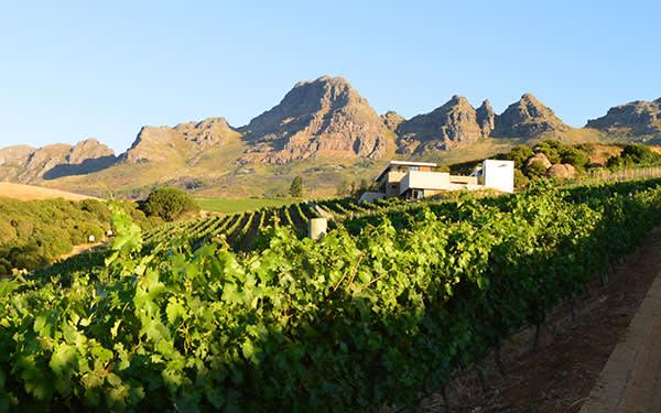 Wine Estate, Stellenbosch, Western Cape, South Africa
