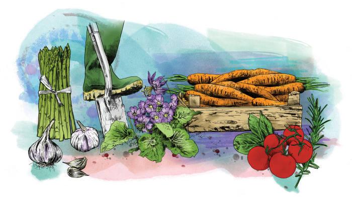Illustrations by Scott Chambers
