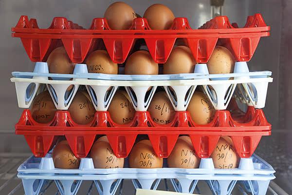 Labelled eggs, avian research centre, Roslin