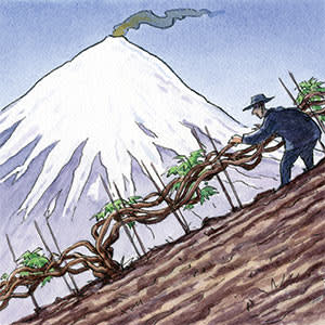 An illustration by Ingram Pinn of a vineyard on a slope of a mountain
