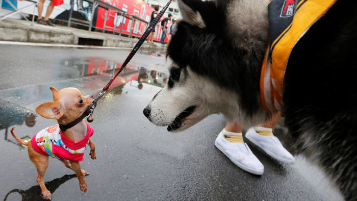 Pets get ready before running a mini-marathon for dogs in Bangkok, Thailand May 7, 2017. REUTERS/Jorge Silva TPX IMAGES OF THE DAY