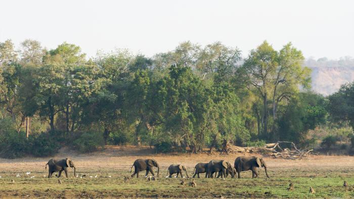 Elephants in the Gonarezhou National Park