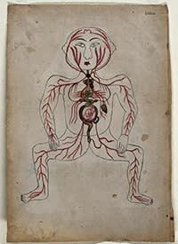 Anatomical illustration showing a foetus in utero, Iran, 19th century