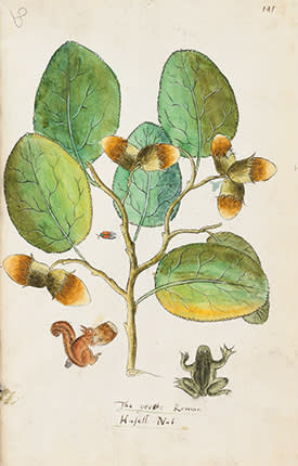 Painting of the Great Roman Hazel Nut with a red squirrel and frog below