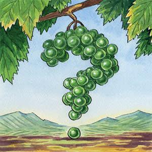Illustration by Ingram Pinn depicting Riesling grapes