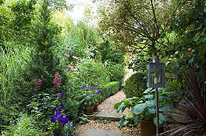 Gravel path in a London garden with lantern and boxwood hedge