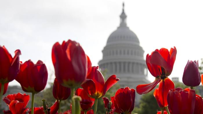 Blooming tulips frame the Capitol dome on Capitol Hill in Washington, Wednesday, April 24, 2013. (AP Photo/Carolyn Kaster)  pworld building