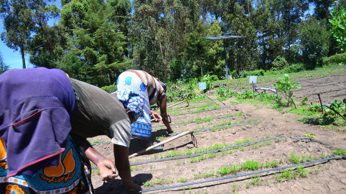 Tilling the land: farmers working irrigated fields