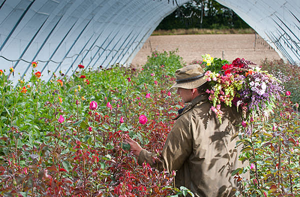 Rose cultivation on her farm in Hampshire