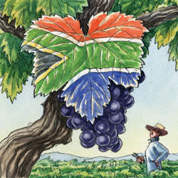 An illustration of South African flag designed on a grape leaf. A man looks on from below