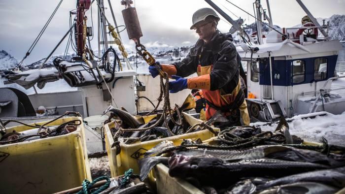 Skrei Cod Fishing in the Arctic, Norway, Europe