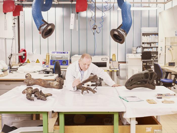 Mark Graham, fossil curator, prepares the skeleton of a mantellisaurus